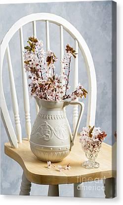 Jug Of Spring Blossom Canvas Print