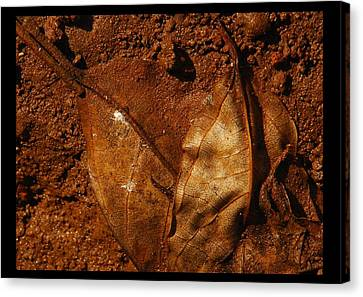 jul 18, 2016, Leaves OF Beauty Canvas Print by Nayan Mipun