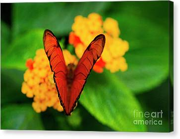 Canvas Print featuring the photograph Julia Butterfly, Dryas Iulia by Ralph A Ledergerber-Photography