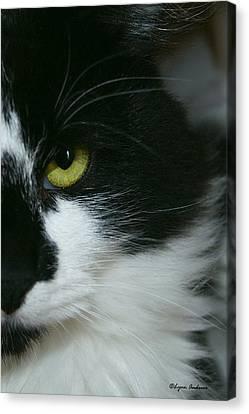 Julies Evil Eye Canvas Print by Lynn Andrews