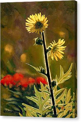 July Afternoon-compass Plant Canvas Print by Bruce Morrison