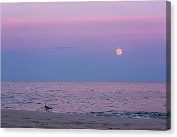 Sea Moon Full Moon Canvas Print - July Full Moon 2016 Lavallette Nj by Terry DeLuco