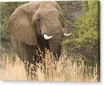 Jumbo Canvas Print by Patrick Kain