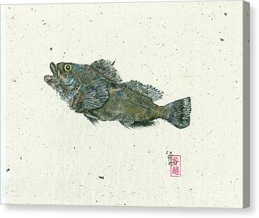 Jumping Kelp Greenling Canvas Print by Julia Tinker
