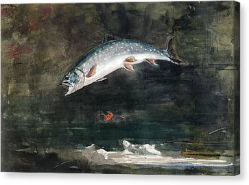 Jumping Trout Canvas Print by Winslow Homer