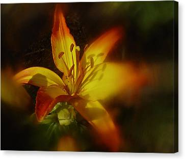 June 2016 Lily Canvas Print by Richard Cummings