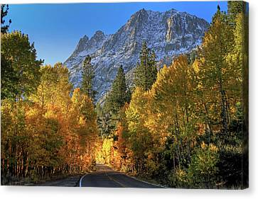 June Lake Loop Canvas Print by Donna Kennedy