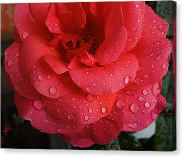 Canvas Print featuring the photograph June  Rose  by Colette V Hera  Guggenheim
