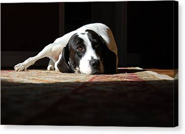 Junebug Canvas Print by Robert Meanor
