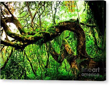 Maple Season Canvas Print - Jungle Forest Himalayas Mountain Nepal by Raimond Klavins