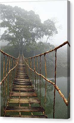 Ropes Canvas Print - Jungle Journey 2 by Skip Nall
