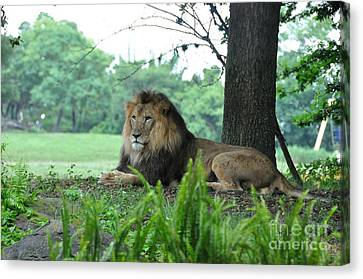 Canvas Print featuring the photograph Jungle King by John Black