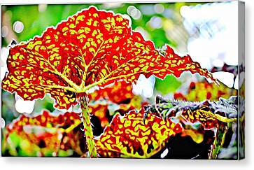 Canvas Print featuring the photograph Jungle Leaf by Mindy Newman