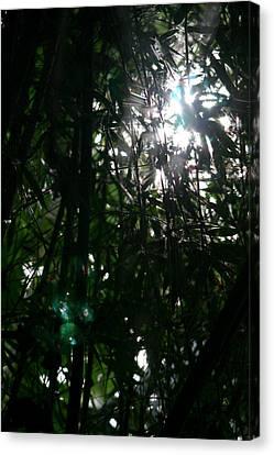 Jungle Light Canvas Print by Brad Scott