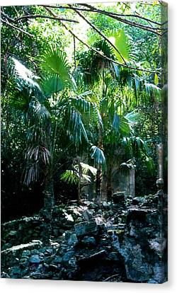 Jungle Sun  Canvas Print by Robert Nickologianis