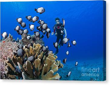 Junior Certified Scuba Diver Canvas Print by Dave Fleetham