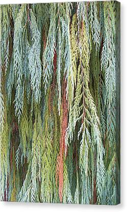 Juniper Leaves - Shades Of Green Canvas Print by Ben and Raisa Gertsberg