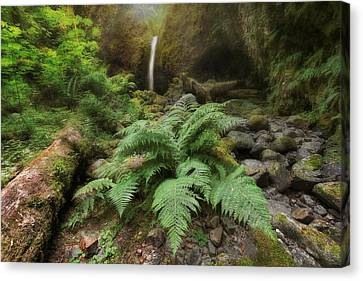 Jurassic Forest Canvas Print by David Gn