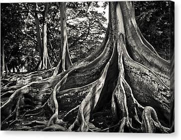 Jurassic Trees Canvas Print by Thorsten Scheuermann