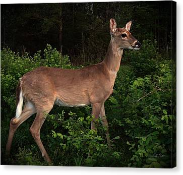 Just A Deer Canvas Print by Bill Stephens