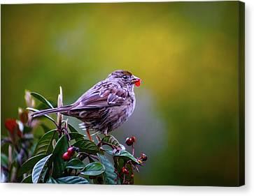 Just A Little Bird Canvas Print by Marnie Patchett