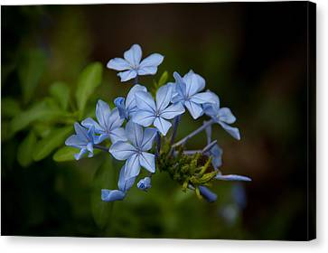 Canvas Print featuring the photograph Just A Touch Of Blue by Monte Stevens