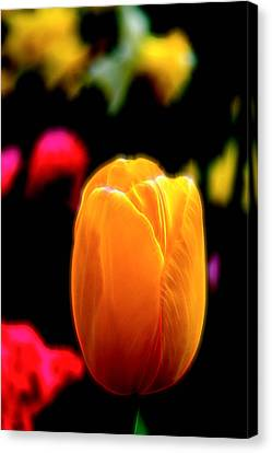 Just A Tulip Canvas Print