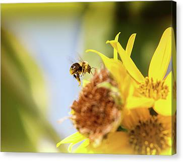 Canvas Print featuring the photograph Just Beeing Me by Annette Hugen
