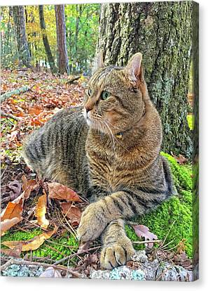 Just Chillin' In The Woods Canvas Print by Susan Leggett