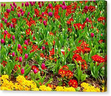 Flowers Canvas Print featuring the photograph Just Flowers by Roberto Alamino