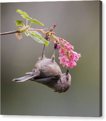 Just Hanging Around Canvas Print by Angie Vogel
