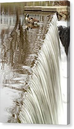 Just On The Edge Canvas Print by Karol Livote
