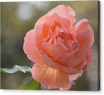 Canvas Print featuring the photograph Just Peachy by Julie Andel