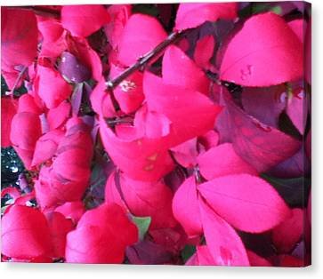 Just Red/pink Canvas Print