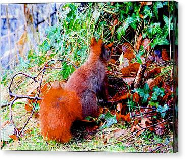 Just Squirrelling Canvas Print by Dorothy Berry-Lound