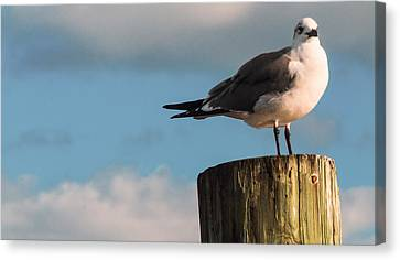 Just Standing On The Dock Canvas Print by Phillip Burrow