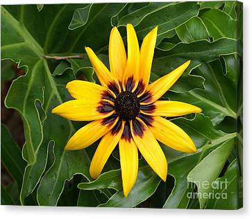 Just Sunning Canvas Print by Debbie May