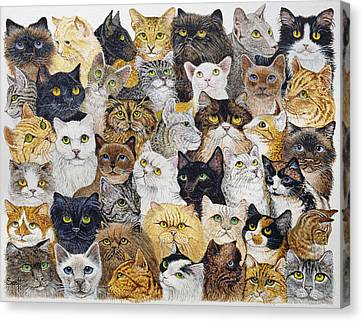 Just The Cat's Whisker Canvas Print by Pat Scott