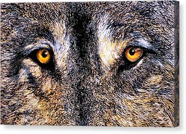 Just Watching Wolf Canvas Print by JoLyn Holladay