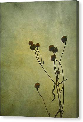 Just Weeds . . . Canvas Print