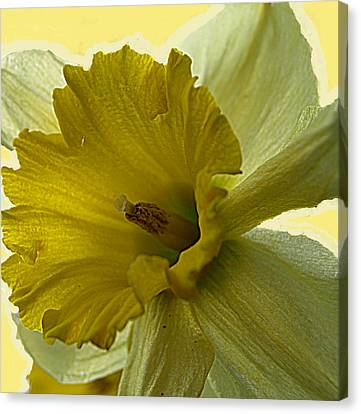 Just Yellow Canvas Print by Kim