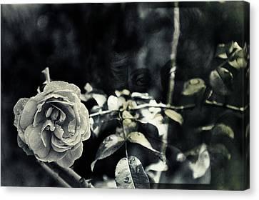 Justitita Canvas Print by Nicole Frischlich
