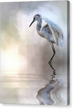 Juvenile Heron Canvas Print by Cyndy Doty
