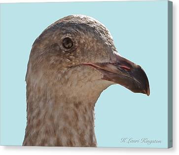 Juvenile Western Gull Bird Canvas Print