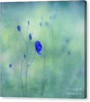 Indigo Canvas Print by Priska Wettstein