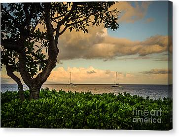 Canvas Print featuring the photograph Ka'anapali Plumeria Tree by Kelly Wade