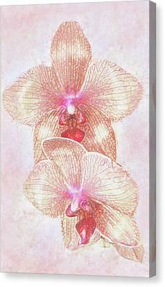 Kaleidoscope Orchid  Canvas Print by Jane Schnetlage