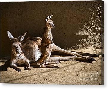 Kangaroo Canvas Print - Kangaroo Joey by Jamie Pham