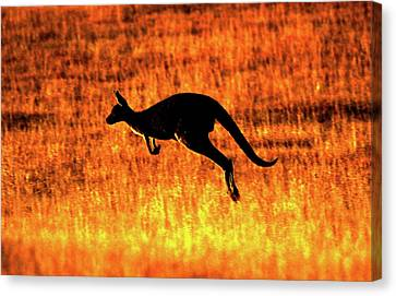 Kangaroo Sunset Canvas Print by Bruce J Robinson