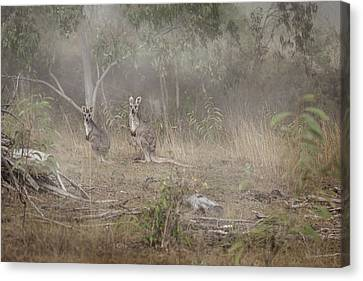 Wine Scene Canvas Print - Kangaroos In The Mist by Az Jackson